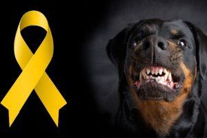 Žltá stužka na obojku psa?Mali by ste vedieť čo to znamená