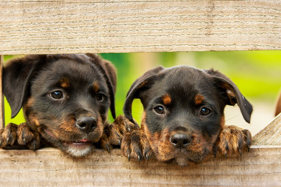 Kliešte u psov? Pozor na ne, stačí jeden