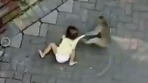 opica sa pokúša uniesť dieťa